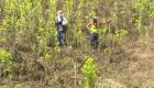Colombia se alista para reiniciar fumigaciones con glifosato