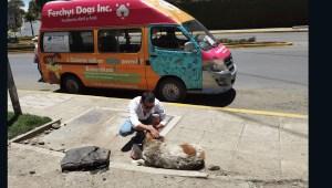 Al borde del llanto, pide apoyar a los perros callejeros