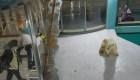 Osos polares son las estrellas de polémico hotel en China