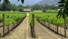 Compañía de vinos oferta una posición por US$ 10.000 al mes