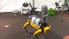 Este perro robótico ayuda al personal sanitario de un hospital