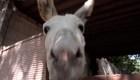 Un santuario para burros en México
