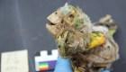 Investigan por qué momificaban a varias aves en Chile
