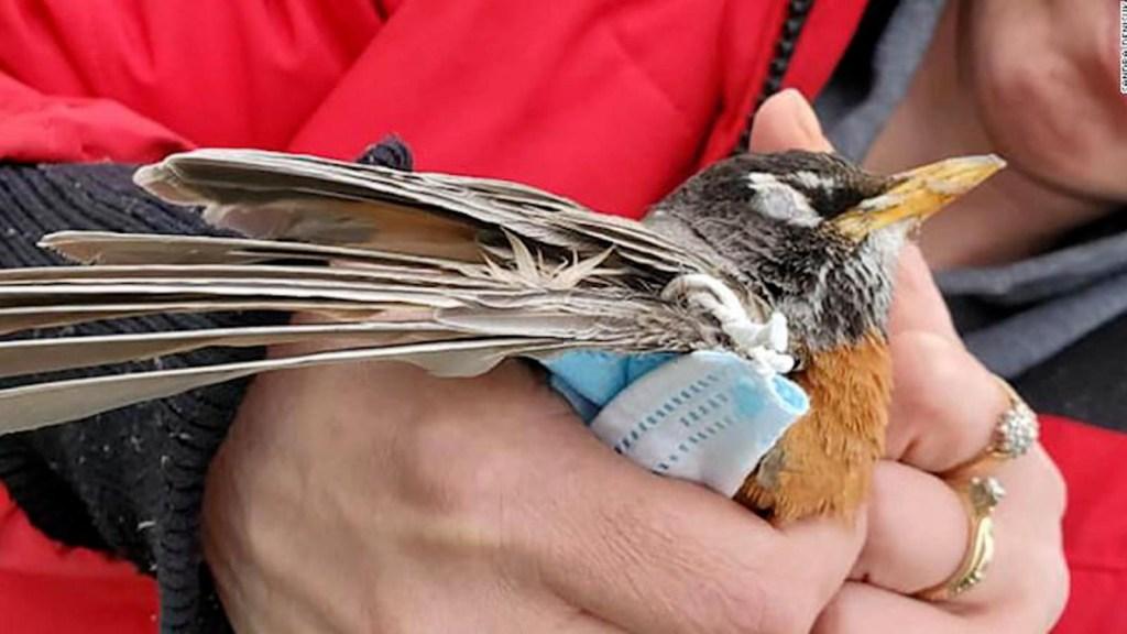 Desechos vinculados al covid-19 amenazan especies