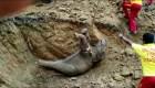 Espectacular rescate de una cría de elefante en la India