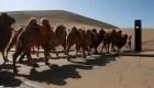 Conoce este semáforo para camellos, en China