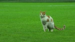 Gato irrumpe en partido de fútbol en Turquía