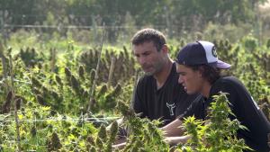 De las artes marciales mixtas al cultivo de cannabis