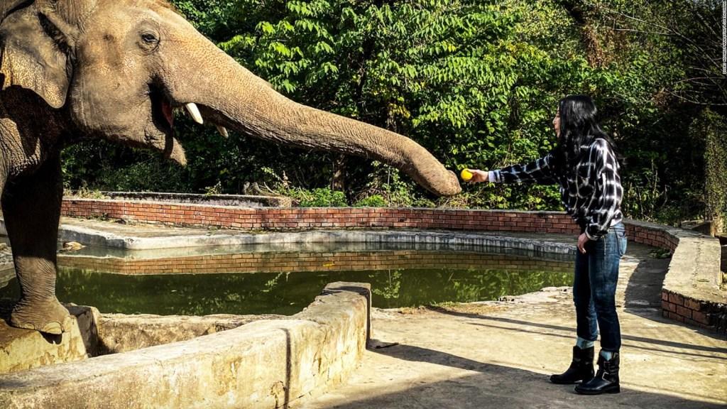 Cher y un elefante, centro de un documental en el Día de la Tierra