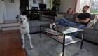 Evalúan ley de tenencia compartida de mascotas en España