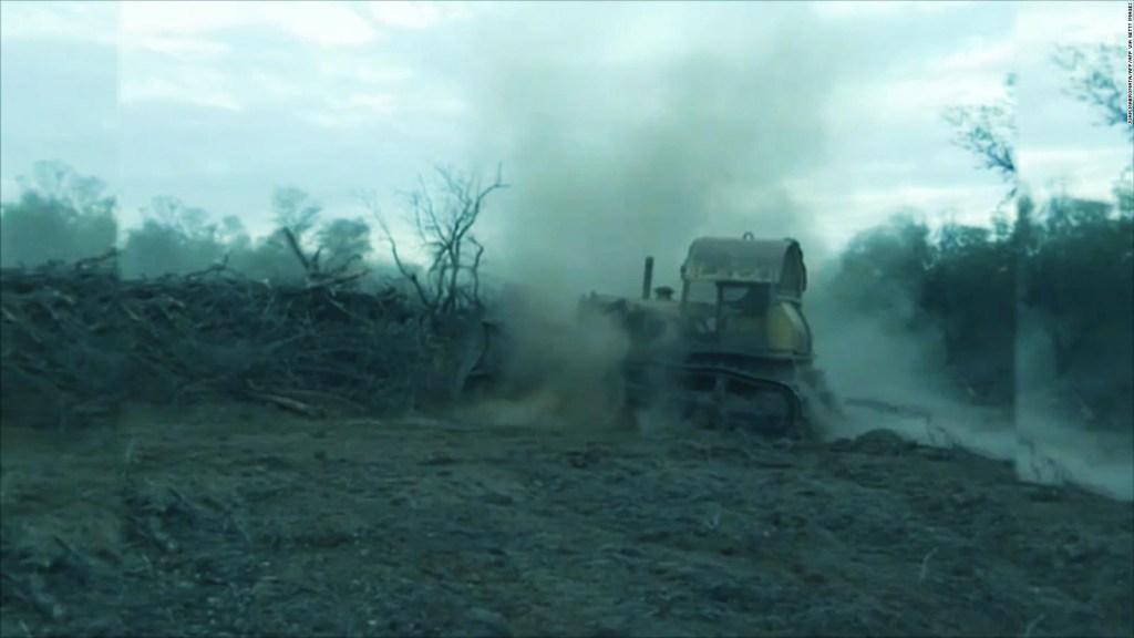 El panorama negativo de los bosques en Argentina
