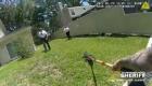 Agente lleva a caimán de regreso a estanque con escoba