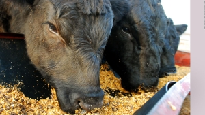 EE.UU.: trágico impacto de la contaminación agrícola