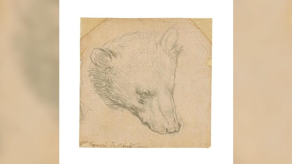 Subastan un pequeño oso dibujado por Da Vinci