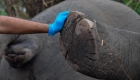 Tormenta en India provoca muerte de unos 18 elefantes
