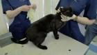 Rusia inicia vacunación de mascotas contra el covid-19