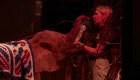 Elefanta rescatada se recupera junto a una manada