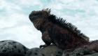 Día Mundial del Medio Ambiente desde las Islas Galápagos