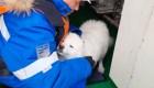 Marineros rusos rescatan a adorable perra en el Ártico