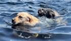 En video: la inigualable amistad de una marmota y un perro