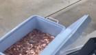Padre pagó manutención de su hija con 80.000 monedas