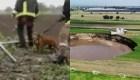Rescatan a perritos que cayeron al socavón en Puebla