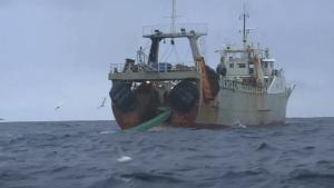 "Advierten de ""depredación"" de fauna marina de Argentina"