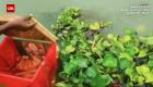 Hallan a una bebé flotando en una caja en el río Ganges