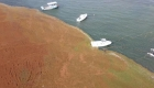 Bahía de Puerto Rico parece campo de golf por sargazo