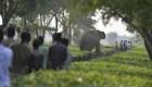 Elefantes y personas luchan en La India
