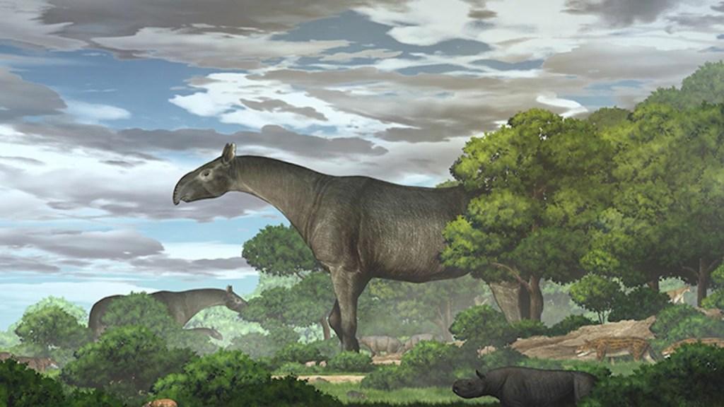 Este mamífero prehistórico fue el más grande de la Tierra