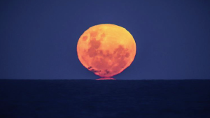 """¿Cuándo podrás ver la """"luna de fresa""""?"""