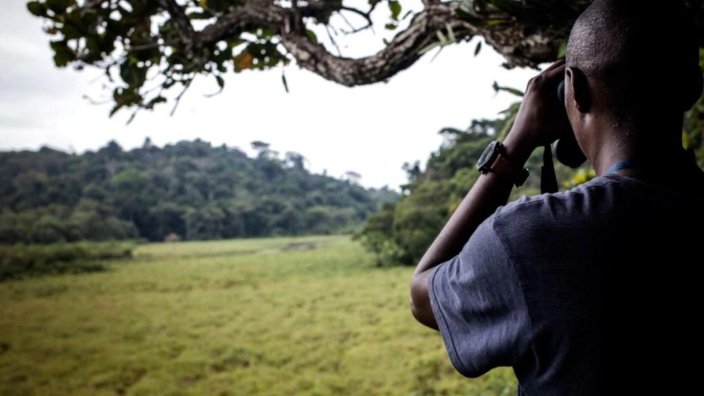 Gabón recibe pago para proteger sus bosques
