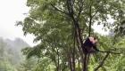 Panda gigante desafía la gravedad en la copa de un árbol