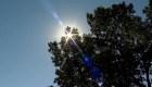 Ola de calor azota a Canadá: reportan más de 230 muertes