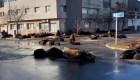 Lobos marinos se toman las calles de Mar del Plata