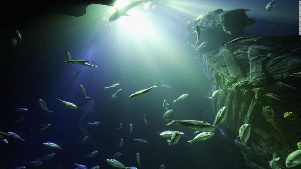El ácido en los océanos puede dejar sordos a los peces