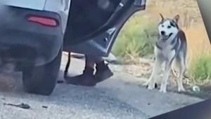 Así reaccionó un perro al ser abandonado (termina bien)