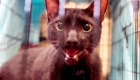 Gato se reúne con sus dueños tras colapso en Miami