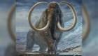 Colmillo arroja detalles sorprendentes sobre los mamuts