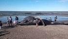 Las causas de la muerte de ballenas en Sudamérica