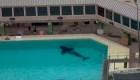 Orca de 6 años muere en SeaWorld