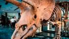 Dinosaurios: subastan el Triceratops más grande en París