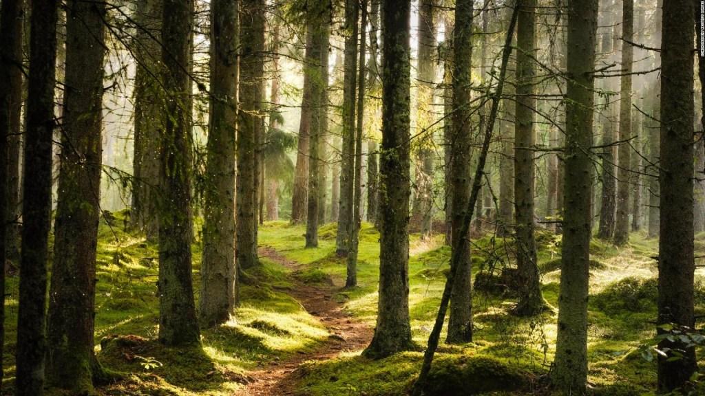 Una de cada tres especies de árboles podría extinguirse