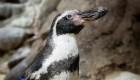 Muere uno de los pingüinos más viejos del mundo