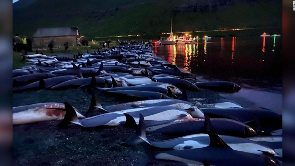 Un mar de sangre: dramática cacería de más de 1400 delfines