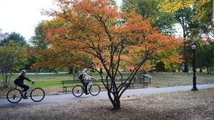 Mira por qué en otoño las hojas tienen un color único