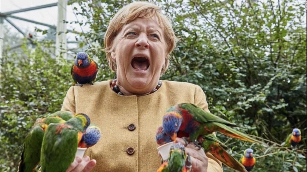Mira a Angela Merkel alimentando a unos pájaros
