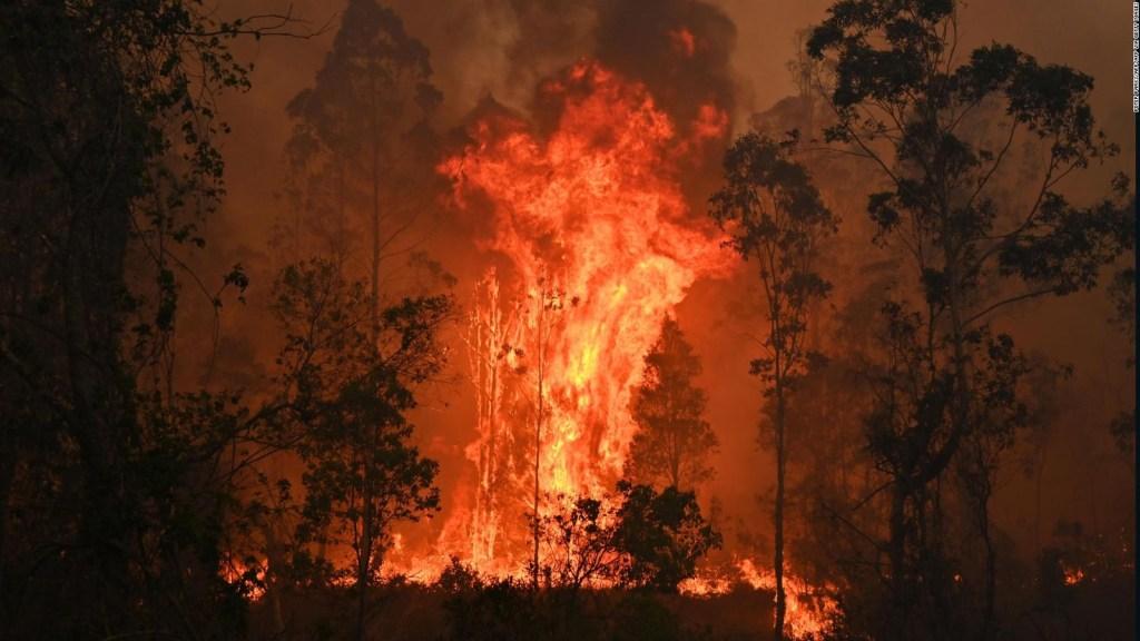 Crisis climática: ¿Cómo va la lucha en América Latina?