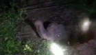 Dramático rescate de un elefante atrapado en una fosa